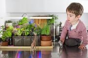 Фото 3 Лампы для растений: 45 фото типов и советы, как выбрать подходящую