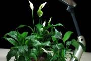 Фото 8 Лампы для растений: 45 фото типов и советы, как выбрать подходящую