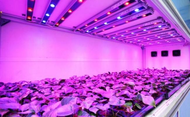 LED-фитолампы