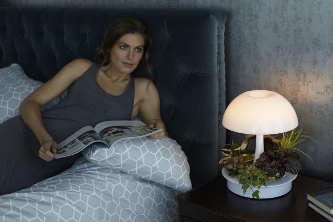 Открытый мини-сад в спальне возле кровати. Здесь лампа также выполняет также и функцию ночника