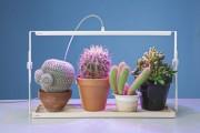 Фото 5 Лампы для растений: 45 фото типов и советы, как выбрать подходящую