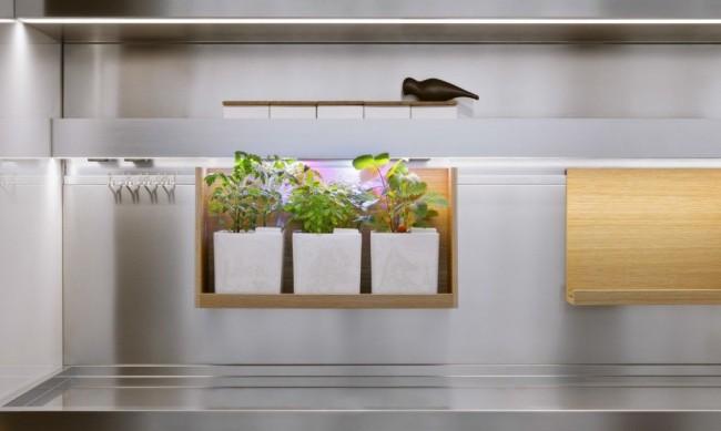Ниша для растений с подсветкой, украшающая современную кухню