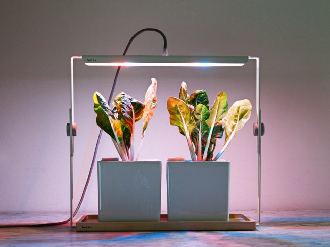 Свойства светодиодных светильников позволяют размещать в непосредственной близости от растения