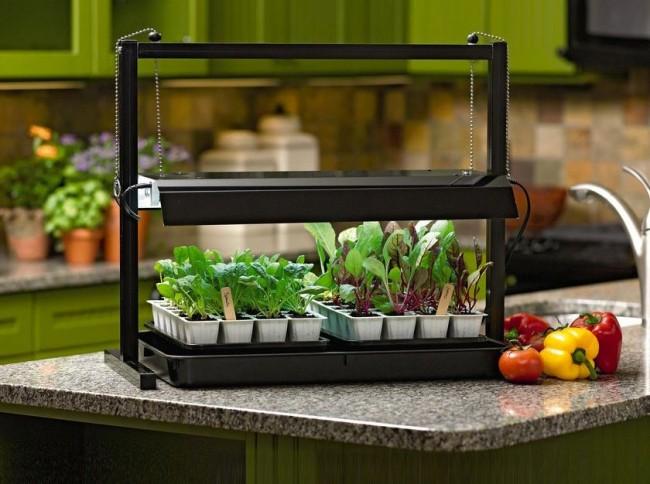 Равномерное искусственное освещение овощной рассады