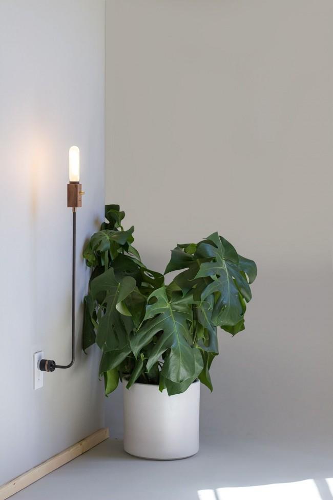 Энергосберегающие лампы обладают спектром излучения, в котором много синего, поэтому подходят нецветущим растениям
