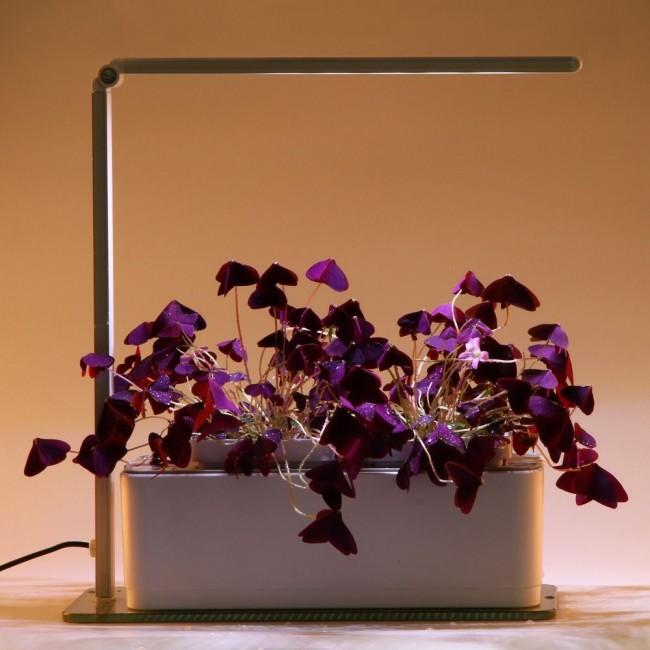 Компактная подсветка для домашних цветов