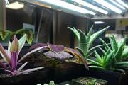 Фото 2 Лампы для растений: 45 фото типов и советы, как выбрать подходящую