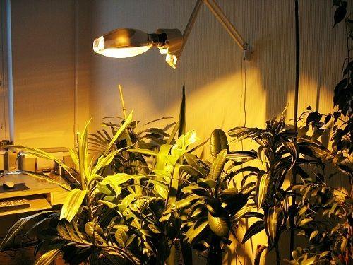 Натриевая лампа - один из самых эффективных источников искусственного света для домашних растений