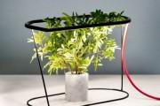Фото 9 Лампы для растений: 45 фото типов и советы, как выбрать подходящую