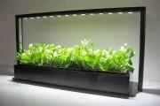 Фото 11 Лампы для растений: 45 фото типов и советы, как выбрать подходящую