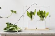 Фото 13 Лампы для растений: 45 фото типов и советы, как выбрать подходящую