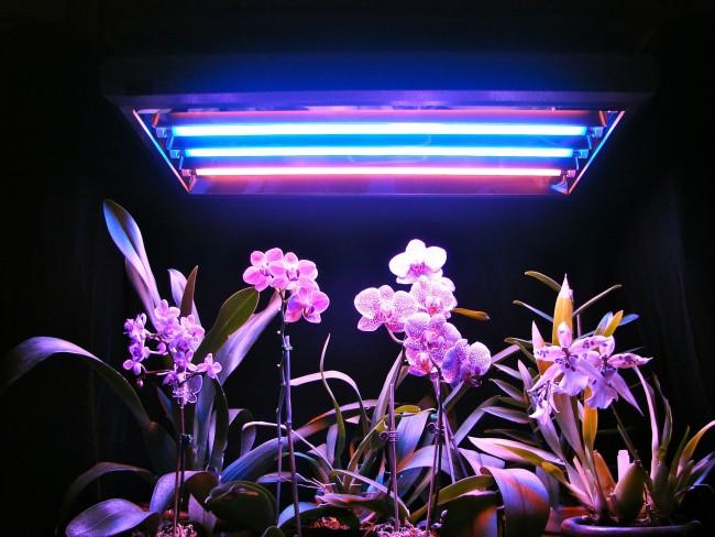 Люминесцентное освещение для великолепных орхидей