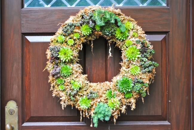 Так как молодило совсем неприхотливое растение, его часто используют для декора