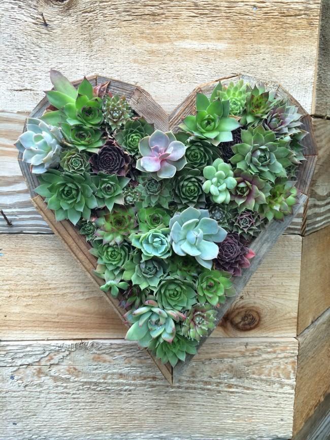 Молодило по праву принадлежит к самым декоративным и необычным растениям