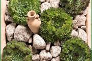Фото 3 Каменная роза (молодило): все секреты посадки, уход в домашних условиях и создание альпинариев в саду