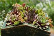 Фото 23 Каменная роза (молодило): все секреты посадки, уход в домашних условиях и создание альпинариев в саду