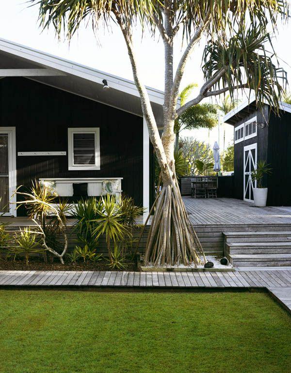 Розросшаяся винтовая пальма в саду