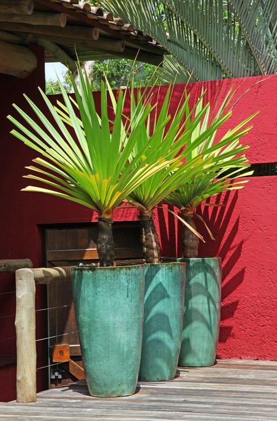 Привлекательное растение которое многие цветоводы с удовольствием выращивают