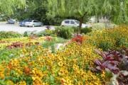 Фото 8 Рудбекия — «золотой шар» в вашем саду (50+ фото видов): советы по посадке и уходу от опытных садоводов