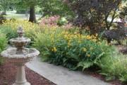 Фото 12 Рудбекия — «золотой шар» в вашем саду (50+ фото видов): советы по посадке и уходу от опытных садоводов