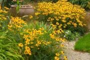 Фото 16 Рудбекия — «золотой шар» в вашем саду (50+ фото видов): советы по посадке и уходу от опытных садоводов
