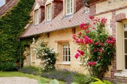 Фото 13 Вьющиеся розы (59 фото): уход за аристократической красавицей