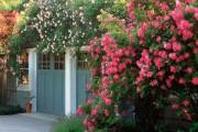 Фото 16 Вьющиеся розы (59 фото): уход за аристократической красавицей