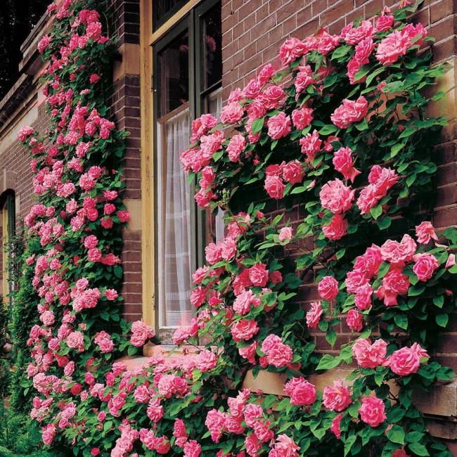 «Живая» стена вдоль здания восхитит великолепным цветением и подарит прохладу