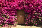 Фото 8 Вьющиеся розы (59 фото): уход за аристократической красавицей