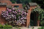 Фото 17 Вьющиеся розы (59 фото): уход за аристократической красавицей