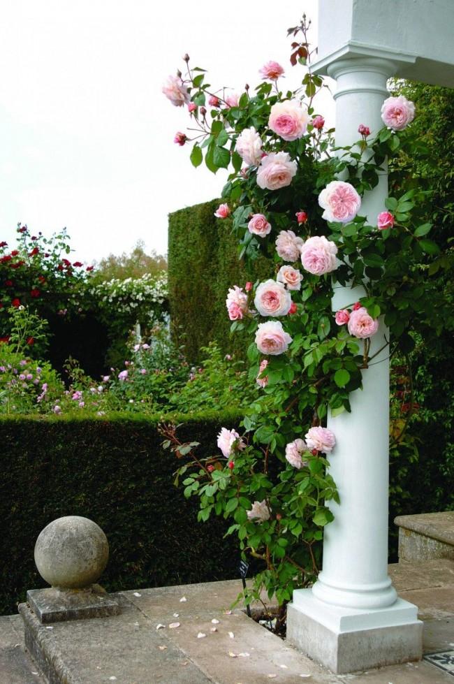 Роза на фоне колоны смотрится очень эффектно