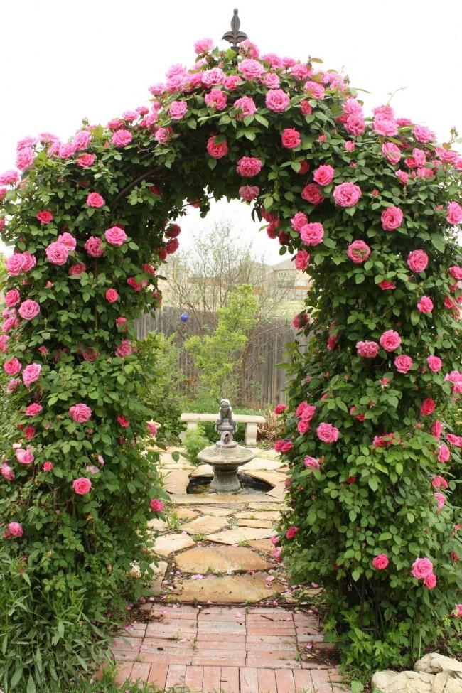 Великолепная арка из вьющихся роз