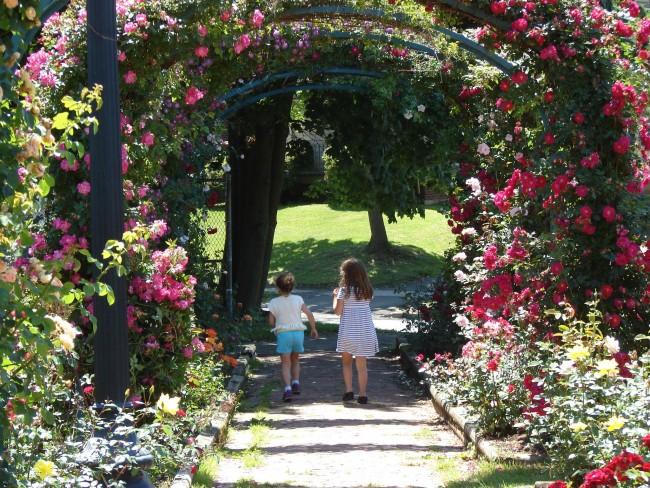 Вьющаяся роза - это настоящая находка для ландшафтного дизайнера, которая позволяет создавать цветущие арки