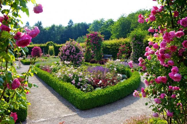 Роза сделает ваш ландшафт ярким и неотразимым