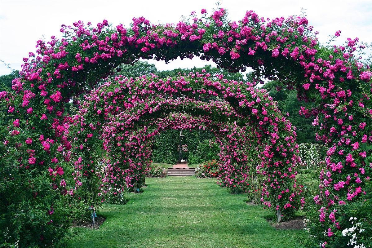 Фото хорошего арки из цветов