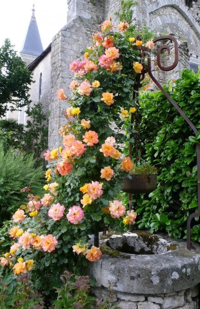 Роза старинным постройкам придаст дополнительный шарм