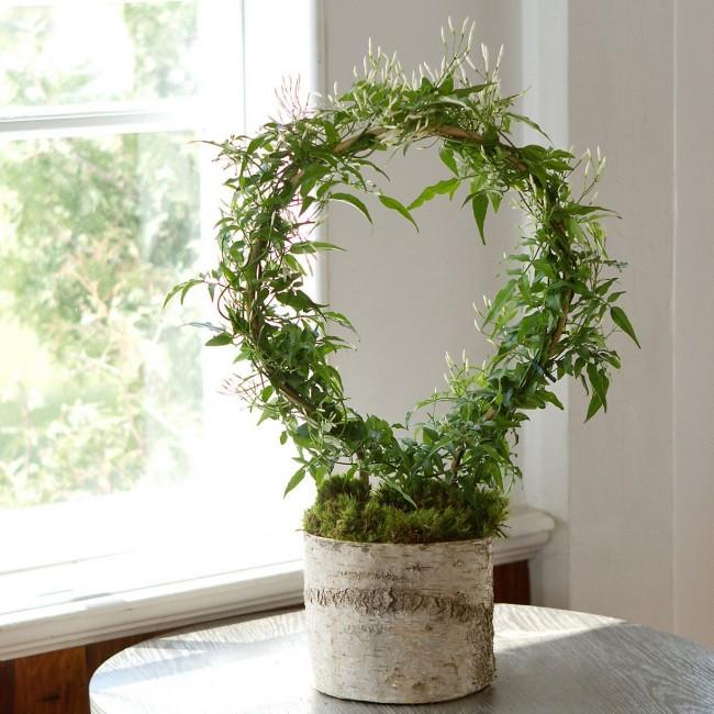 Аромат цветков жасмина снимает стресс и снижает агрессию
