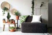 Фото 15 Вьющиеся комнатные растения: великолепная семерка