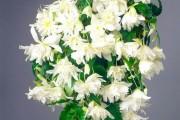 Фото 17 Вьющиеся комнатные растения: великолепная семерка