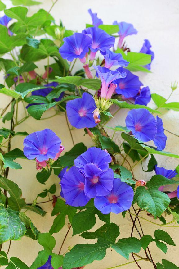 Цветы брату