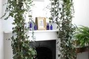 Фото 22 Вьющиеся комнатные растения: великолепная семерка