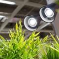 Лампы для растений: 45 фото типов и советы, как выбрать подходящую фото