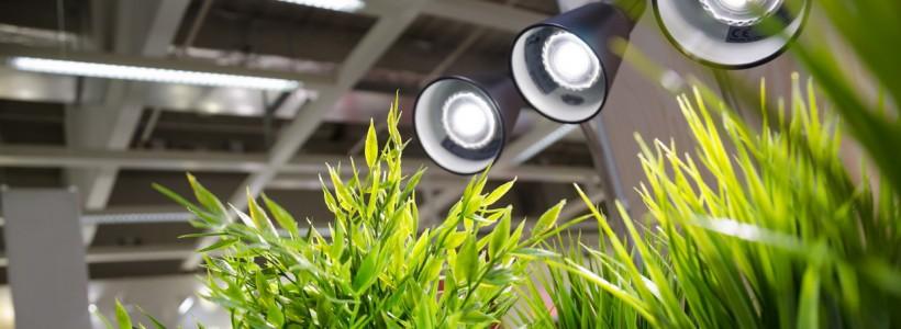 Лампы для растений: 45 фото типов и советы, как выбрать подходящую