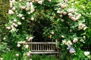 Фото 24 Английская роза (55 фото): новая старинная аристократка