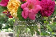 Фото 25 Английская роза (55 фото): новая старинная аристократка