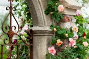 Фото 8 Английская роза (55 фото): новая старинная аристократка