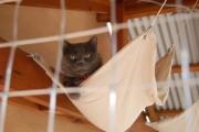 Фото 6 Делаем дом для кошки своими руками: выбор материалов и пошаговые мастер-классы