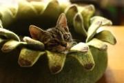 Фото 1 Делаем дом для кошки своими руками: выбор материалов и пошаговые мастер-классы