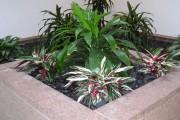 Фото 19 Тропическая красавица строманта: Правила ухода в домашних условиях 40+ фото