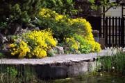 Фото 11 Цветы алиссум : всё, что нужно знать о посадке, выращивании и уходе 50+ фото